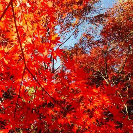 紅葉のお寺ウンド